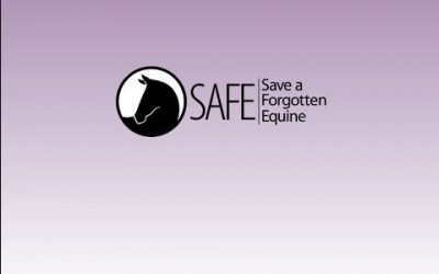 Equicube is Proud to be a SAFE Sponsor!